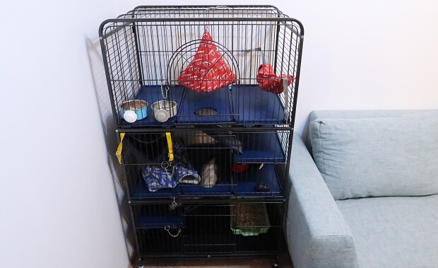 what does ferret cage look like